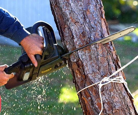 Спил деревьев в Ижевске и Удмуртской Республике