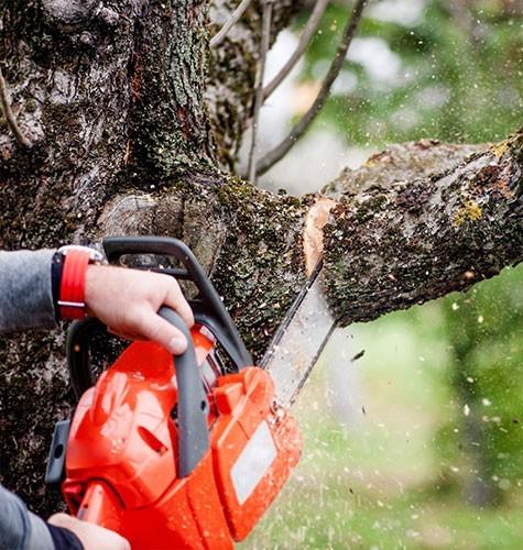 Услуга по спиливанию деревьев в Ижевске